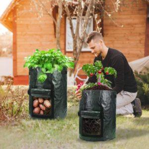 where to buy sweet potato grow bag online