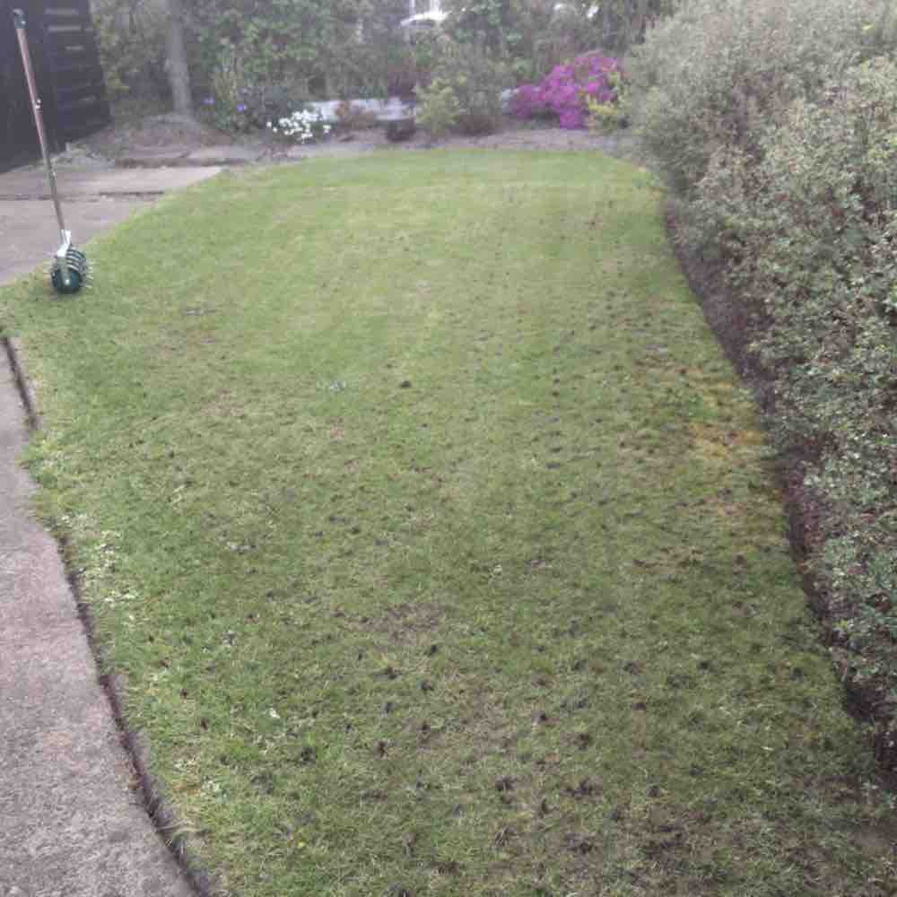best aerator for lawn